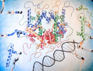 NucleosomeAssembly_test