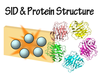 Click to view a list of projects about SID and protein structure