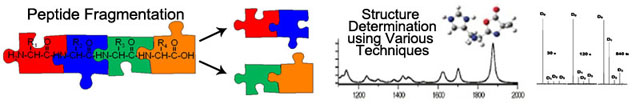 Peptide Fragmentation Research