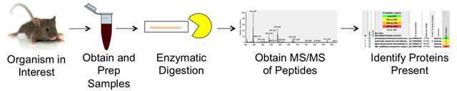 Proteomics Workflow